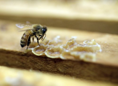 Marks & Spencer plan to help environment by releasing honeybees criticised by conservationists
