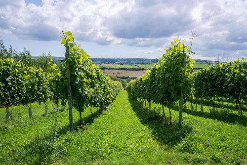 10 best vineyards to visit across the UK, from rosé in Cornwall to blanc de blancs in Surrey