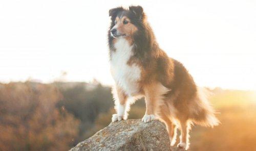 5 Reasons To Live Like A Dog