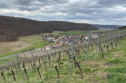 Weinberge, Wald und wilde Christrosen