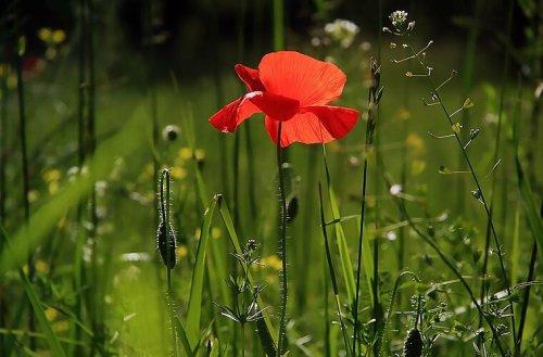 10 giftige Gartenpflanzen: Besonders für Kinder und Haustiere gefährlich