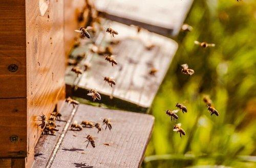 Bad Rodach: Unbekannter verschließt Bienenstock - Tausende Bienen sterben
