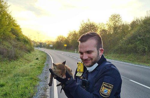 Würzburg: Junger Fuchs von Polizei gerettet