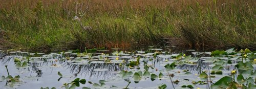 Florida scientists are using a radar prototype in the Everglades