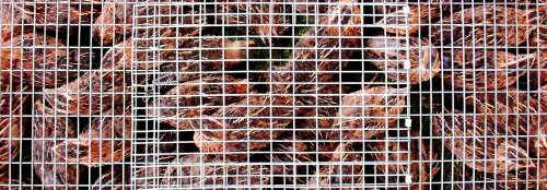 EU parliament calls for ban on caged farming practices