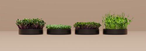 This indoor garden grows microgreens in one week