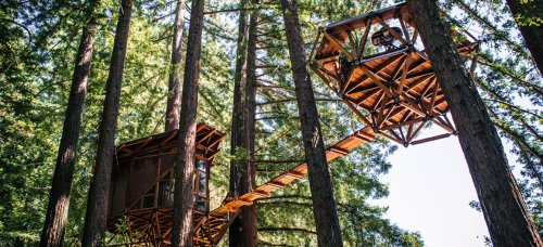 Pinecone-shaped treehouse provides stunning 360-degree views of dense Redwood forest