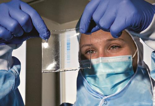 Chez les collectionneurs de protéines | Inserm - La science pour la santé