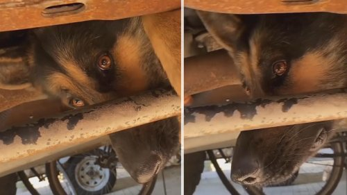Dog Rescued From Truck Undercarriage After Being Scared by Thunder Storm