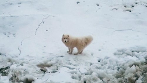 Russian Icebreaker Ship Rescues Dog From Arctic Iceberg