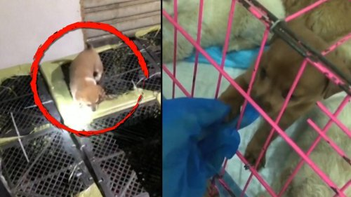 Scores of Puppies and Kittens Rescued From China Pet Smugglers