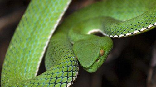 Venomous Snake Bites San Diego Zoo Animal Handler in 'Rare' Incident