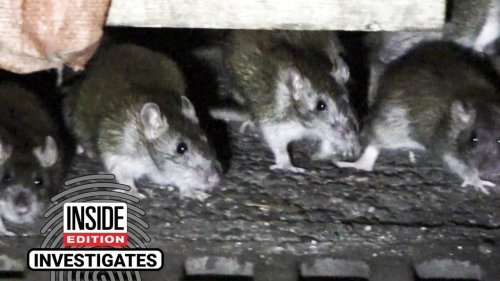 Rats Have Made Themselves at Home in Some NYC Outdoor Dining Sheds