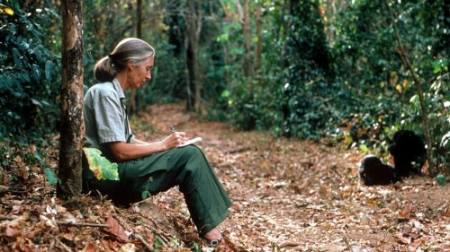 Jane Goodall Joins Initiative to Plant a Trillion Trees by 2030