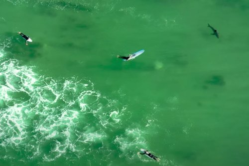 Thanks to Drones, We Now Know That Close Encounters With Great White Sharks Are Really, Really Common