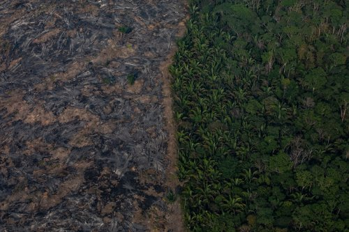 The Amazon Rainforest Is Still in Crisis, The Viral Videos Have Just Stopped