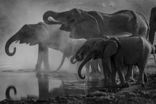A Digital Archive Could Show Us What Elephants Have to Say