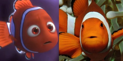 9 'Finding Nemo' plot points that are scientifically accurate