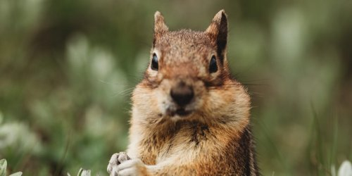 Bubonic-plague afflicted chipmunks and rodents are shutting down parts of Lake Tahoe