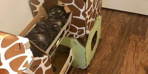 This cardboard cat condo is one of the best purchases I've made as a cat owner — it's affordable and surprisingly durable