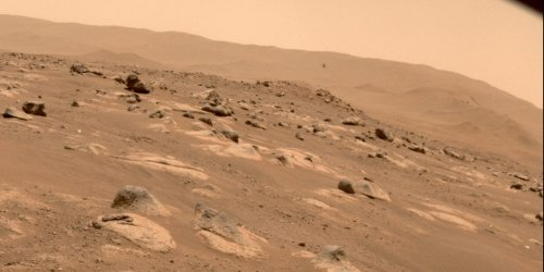 Life detected on Mars might have actually originated in NASA labs, according to an Ivy League scientist