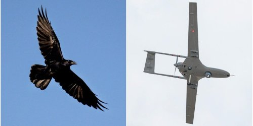 Watch a raven take out a Google drone mid-air as the tech giant is forced to ground its home delivery service due to bird attacks