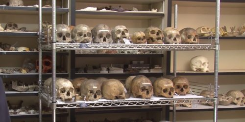 A Pennsylvania museum apologized for collecting the skulls of Black Americans, saying it will return the remains to their communities