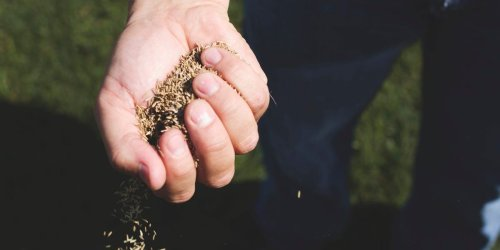 How and when to plant grass seed based on where you live