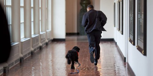 The most iconic photos of White House pets throughout history