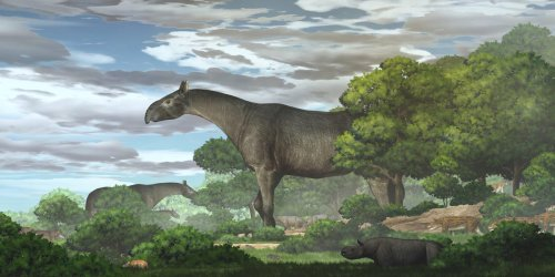 Fossils unearthed in China reveal a new species of giant prehistoric rhino — the largest land mammal to ever walk the Earth