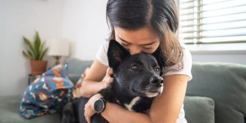 Recent discoveries reveal how dogs are hardwired to understand and communicate with people — even at birth