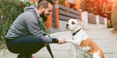 Dog trainers share step-by-step guides to teaching your dog 5 easy (and adorable) tricks