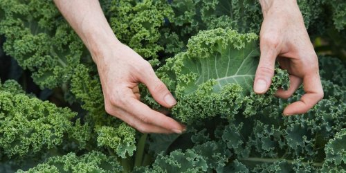 3 science-backed health benefits of vitamin K — and the best food sources for this essential nutrient