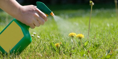 How to make homemade weed killer out of 3 household ingredients