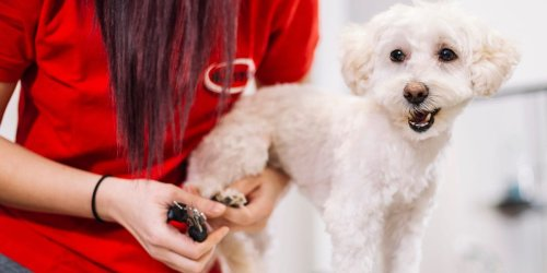 How to cut or grind your dog's nails the right way