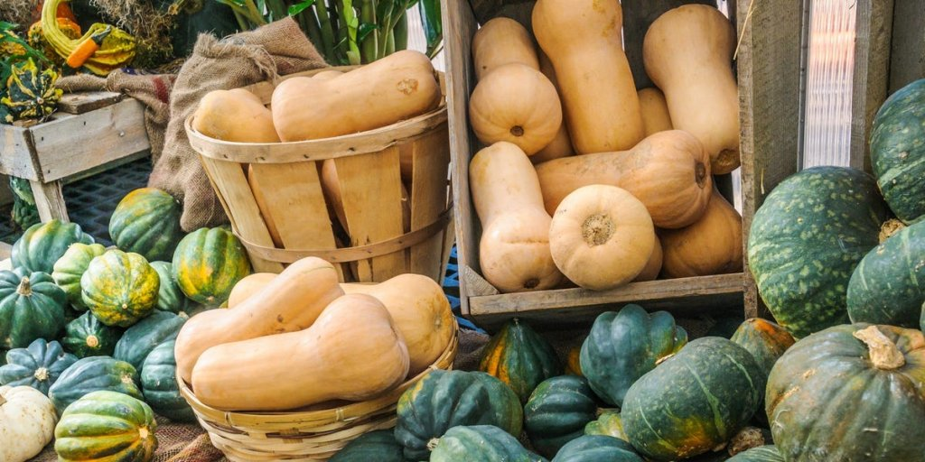SQUASH, PUMPKINS & GOURDS (CURCUBIT) OF EVERY SHAPE AND MEASURE - cover