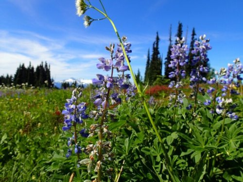 6 Vancouver Area Hikes for Incredible Wildflowers
