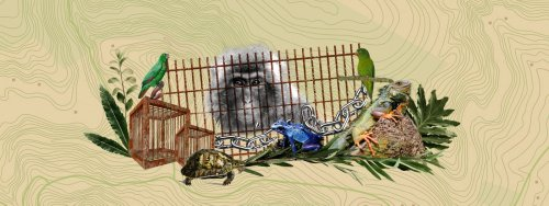 A Roaring Trade: Wildlife Trafficking in Colombia's Amazon