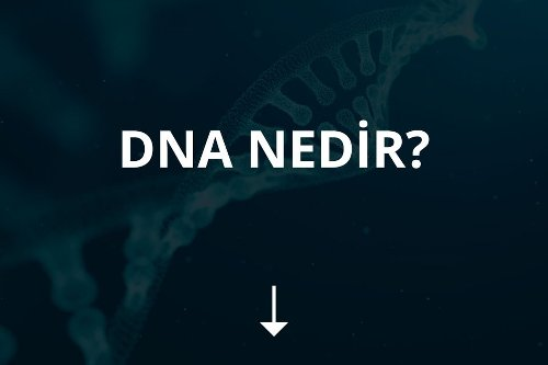 Everything You've Ever Wanted to Know About dna testi