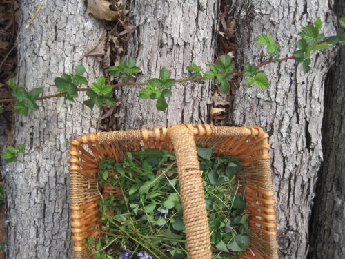 Ground Rules for Foraging Safely