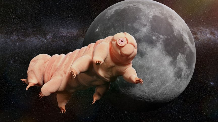 Scientists Used Tardigrades as Bullets to See if They Can Survive Violent Impacts