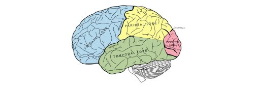 The Properties of Human Memory and Their Importance for Information Visualization