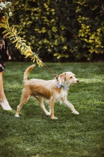 Average Dog-Bite Insurance Claim Now Tops $50,000