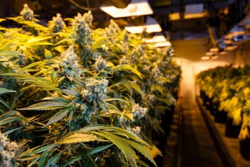 Not Too Late to Put Cannabis Stocks on Your Radar