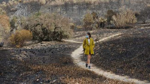 SANParks begins rehabilitation work after massive destruction of Cape Town fire