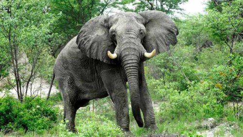 WATCH: Mother elephant tramples crocodile