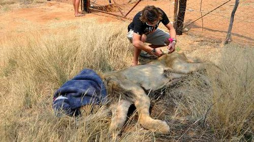 Watershed decision to save South Africa's Lions