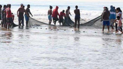 Global warming threatens KZN's Sardine run