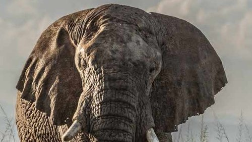 Four African conservation heroes recognised at UK charity awards