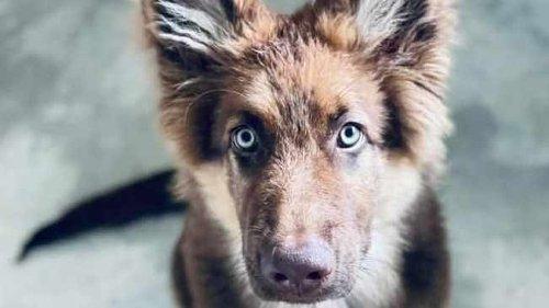 Heartbroken pet owner details how snail poison killed her five dogs